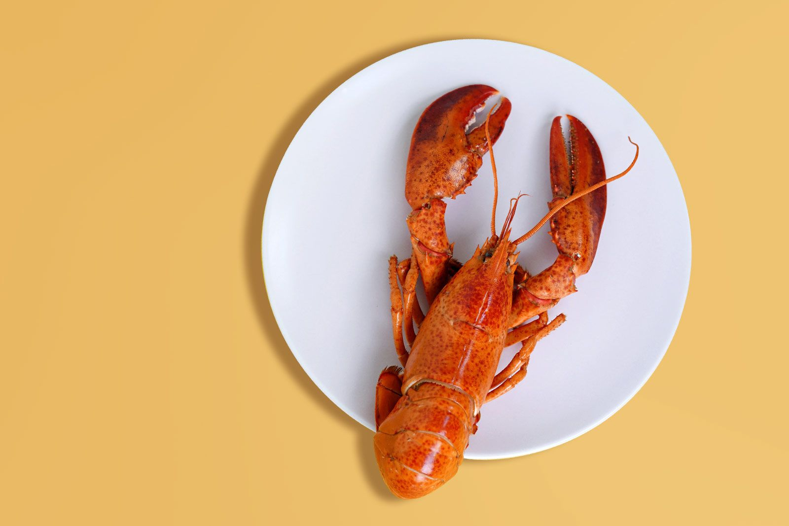 Three Ways to Cook Lobster