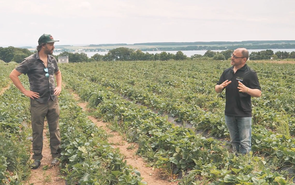 Quebec strawberries: from the field to your plate . . . all in one day!